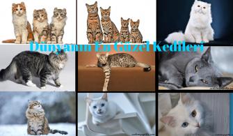 Dünyanın En Güzel Kedileri